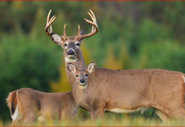 Deer Hunting_1511379511332.JPG