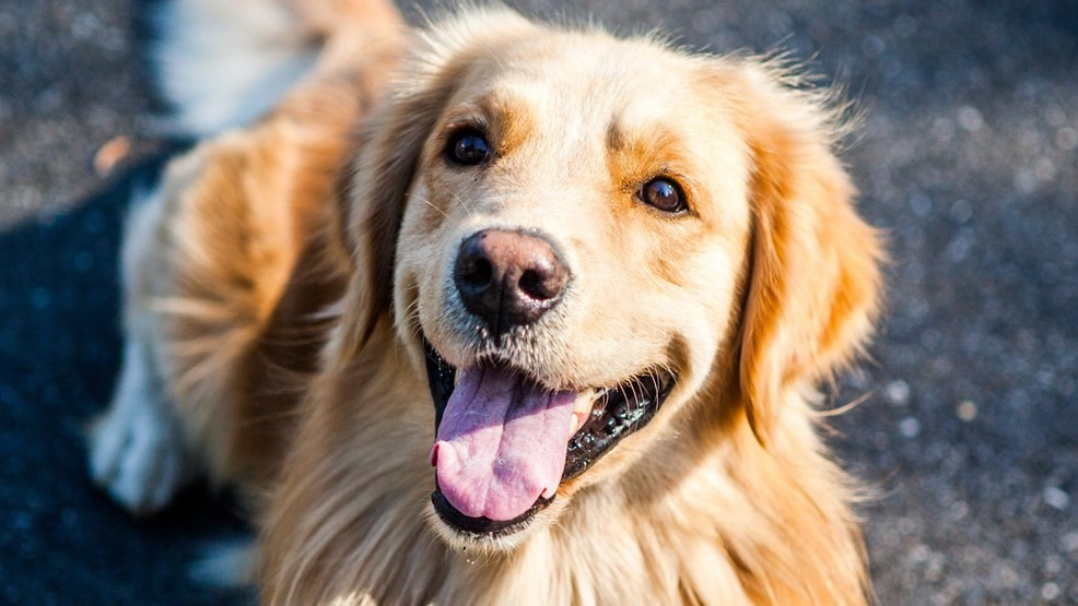 generic dog_1511881980983.jpg