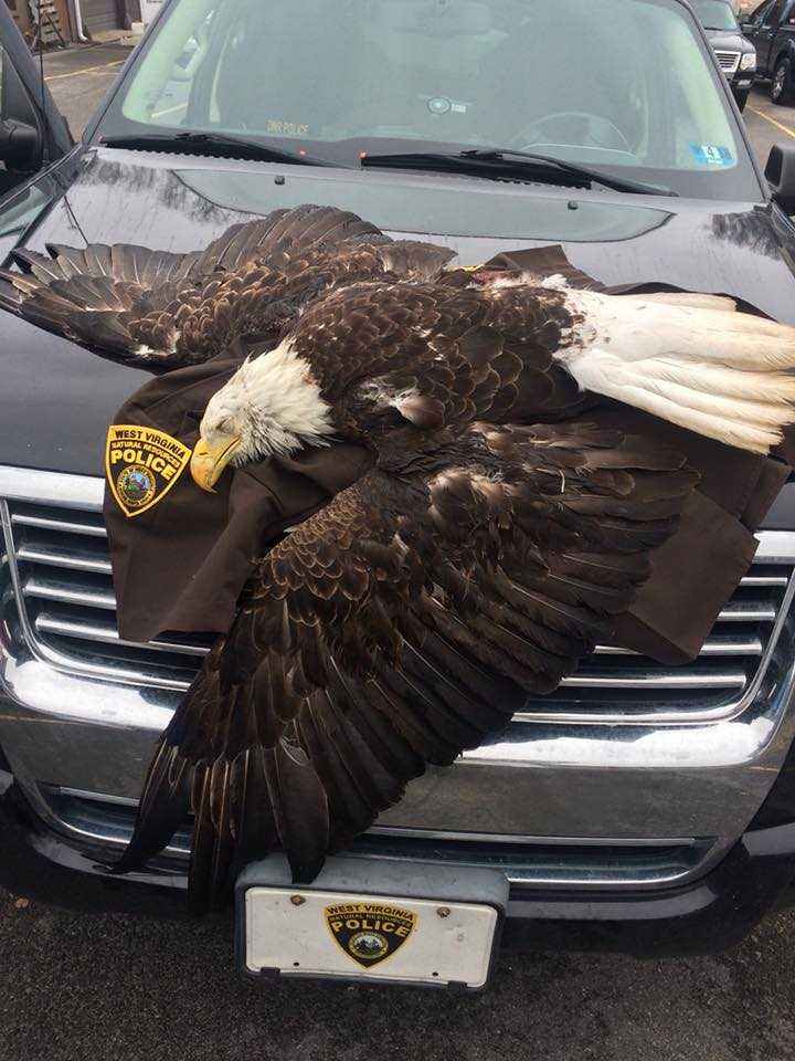 bald eagle 2_1520579229162.jpg.jpg