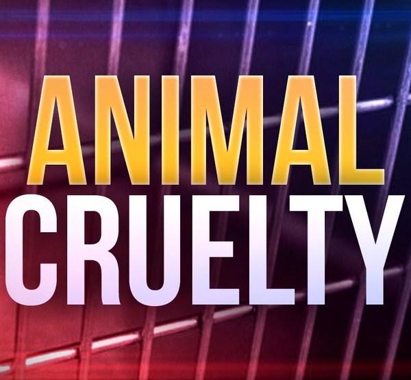 animal cruelty_1527604961696.jpg.jpg