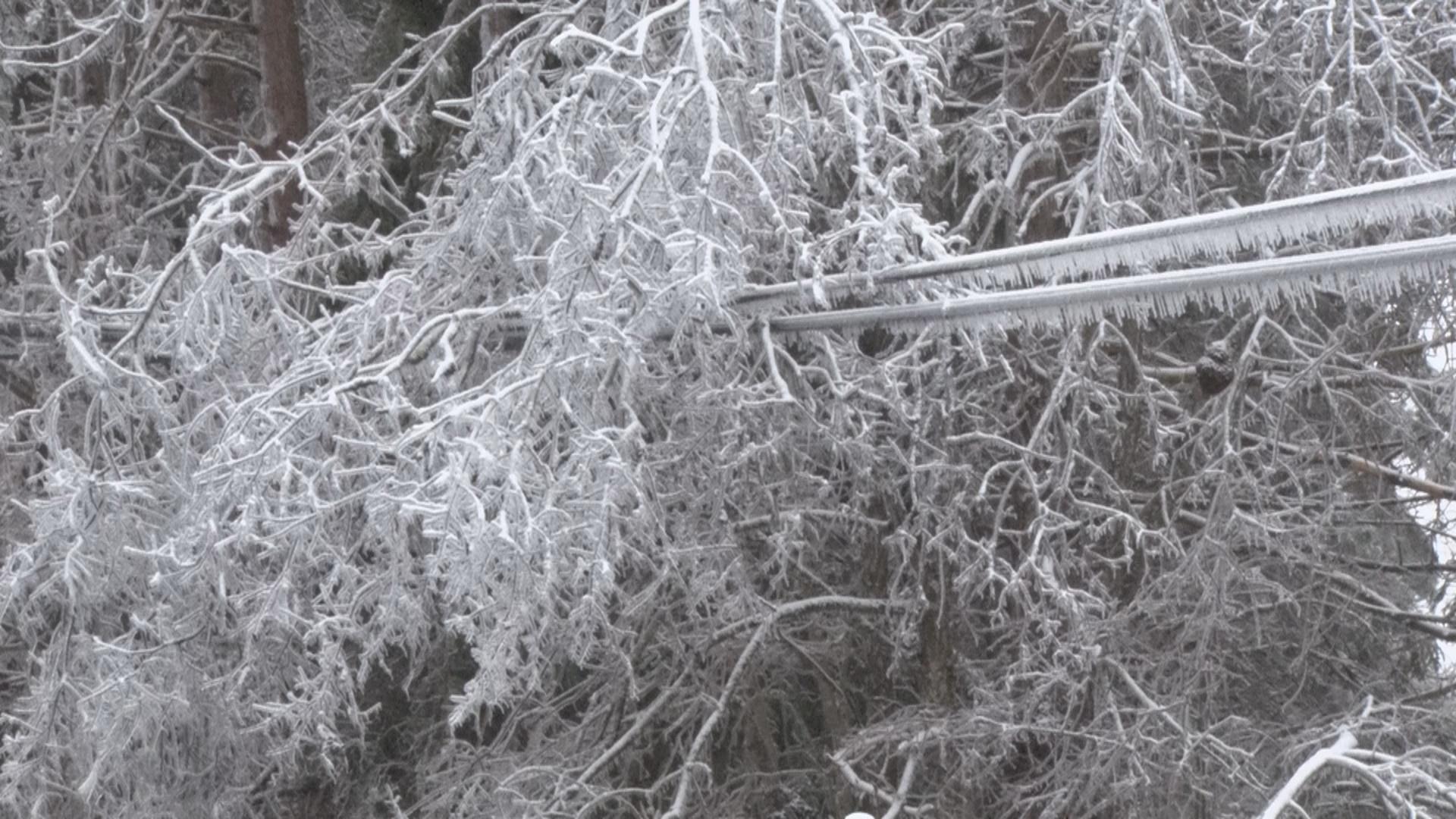 Tree Prep.jpg