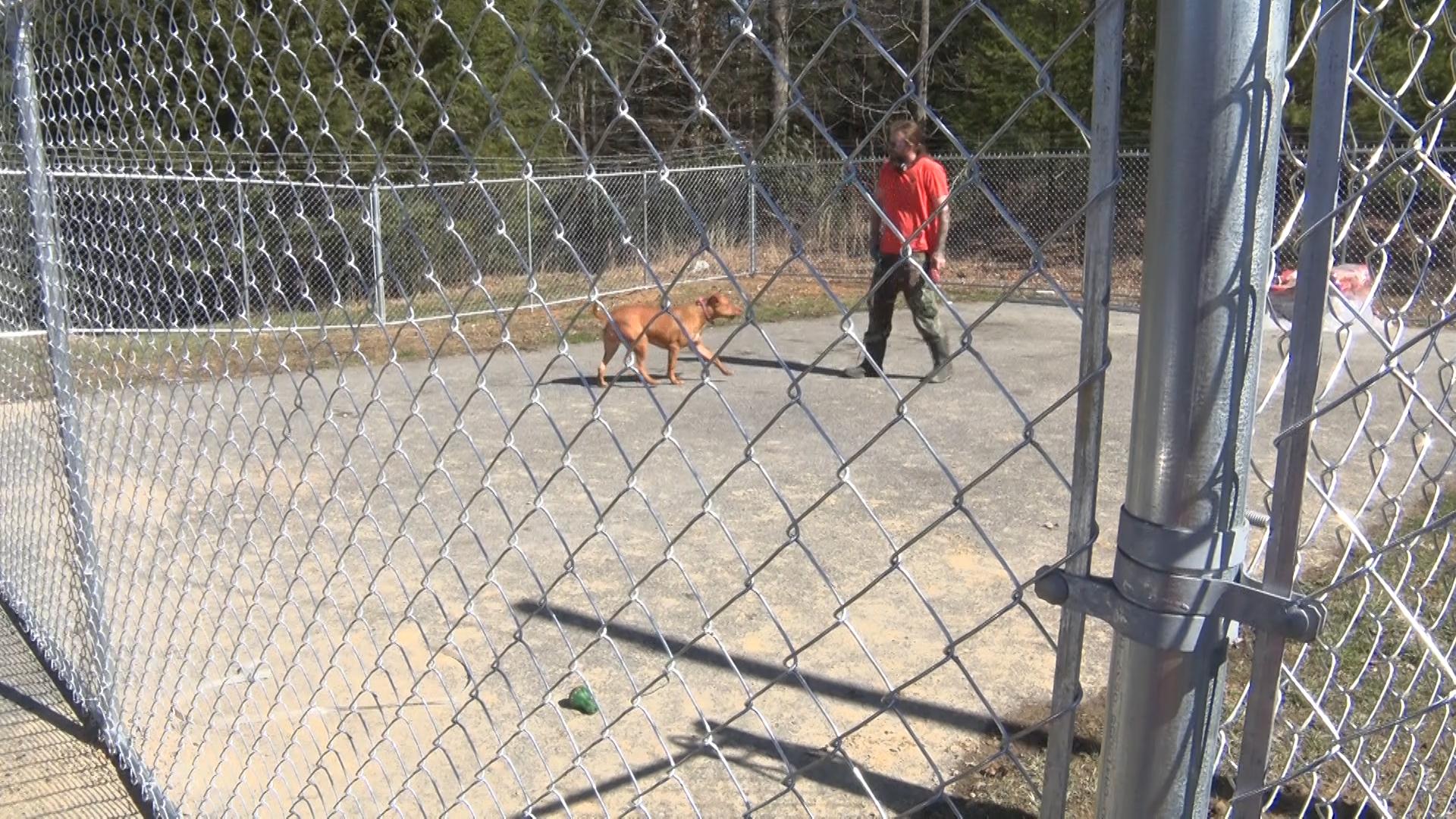 dog yard_1551309961256.jpg.jpg