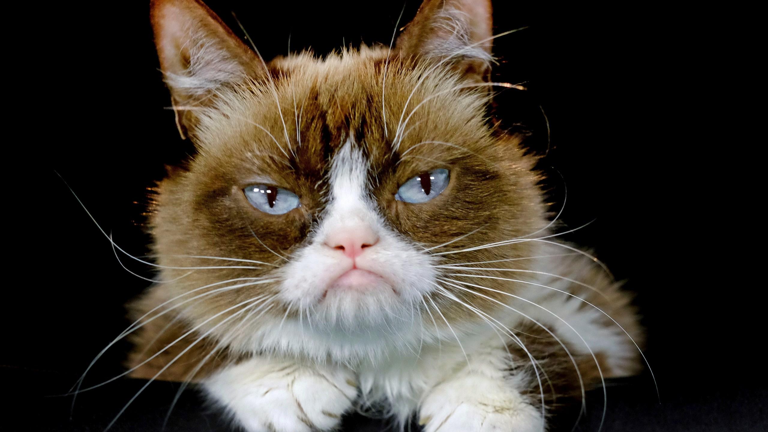 Grumpy Cat Death_1558095977963